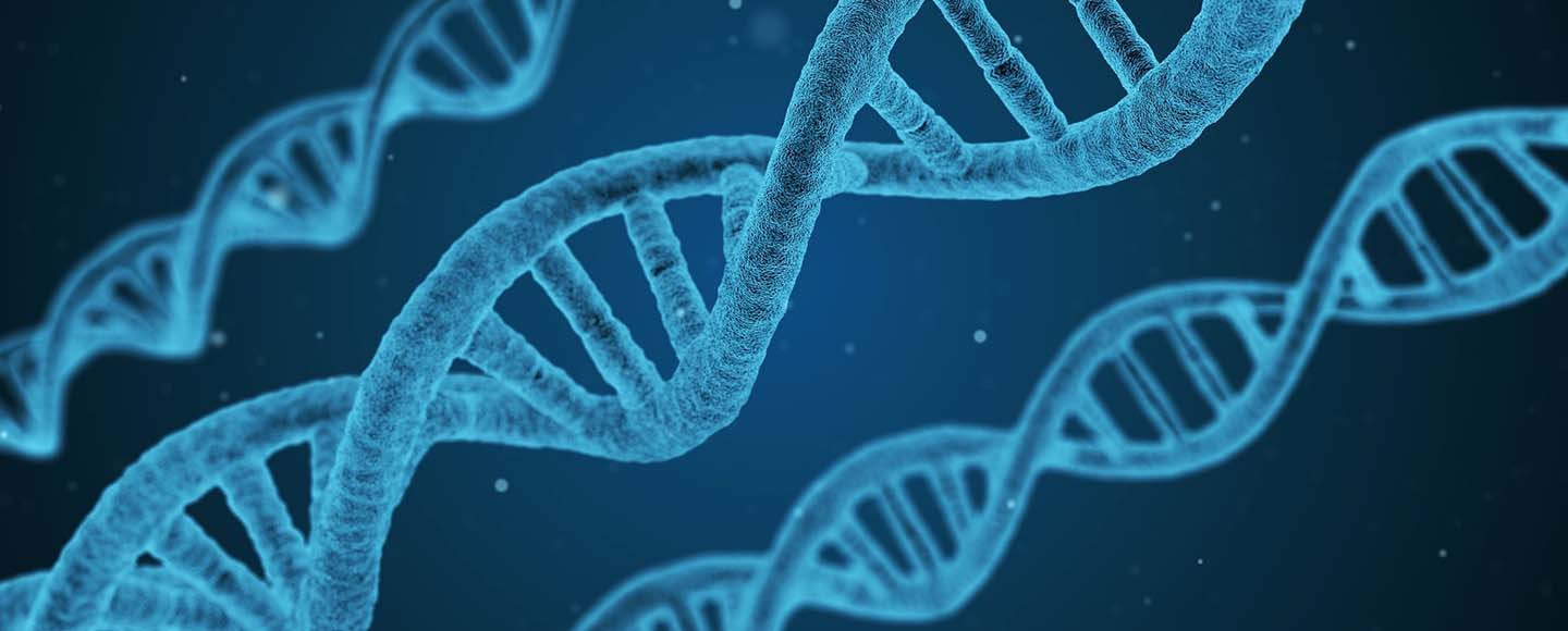 """The DNA Chain of Tradition The Discovery of the """"Cohen Gene"""""""
